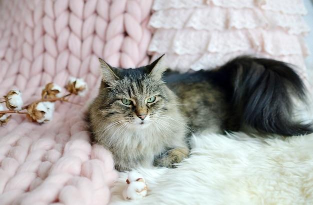 Gatto sdraiato sul letto coperta scozzese gigante pelliccia camera da letto vibrazioni invernali coseni rilassarsi