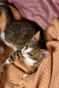 Gatto seduto nella coperta del letto pronto a giocare