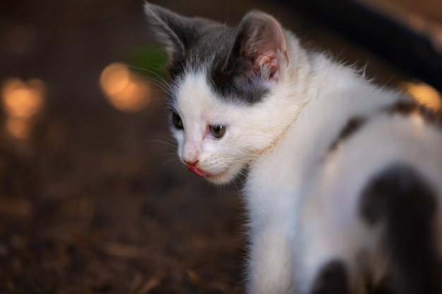 Gatto senza tetto solo con bokeh e fondo vago