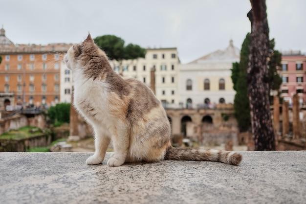Gatto su largo di torre argentina, un quadrato a roma, italia.