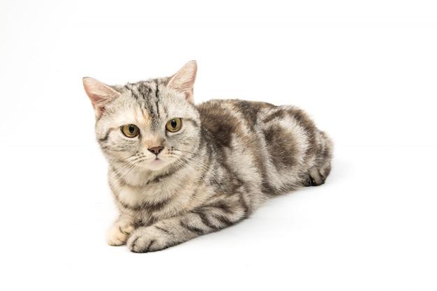 Gatto su sfondo bianco