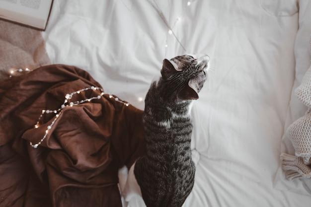 Gatto sul letto comodo