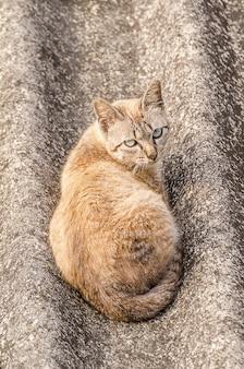 Gatto sul tetto di tegole
