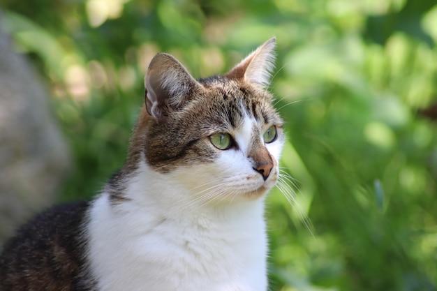 Gatto sveglio che si siede nel giardino
