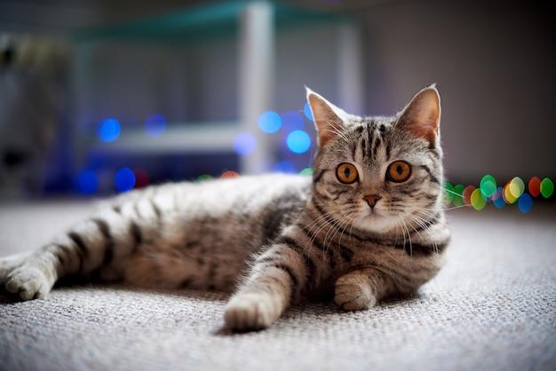 Gatto sveglio che si trova sul pavimento su uno sfondo sfocato con bokeh.