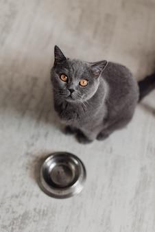 Gatto sveglio che si trova vicino alla ciotola con alimento sul pavimento a casa