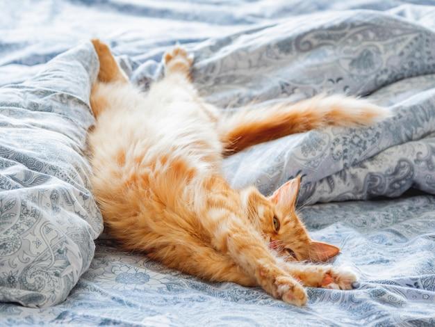 Gatto sveglio dello zenzero che si trova a letto. allungamento soffice dell'animale domestico. casa accogliente