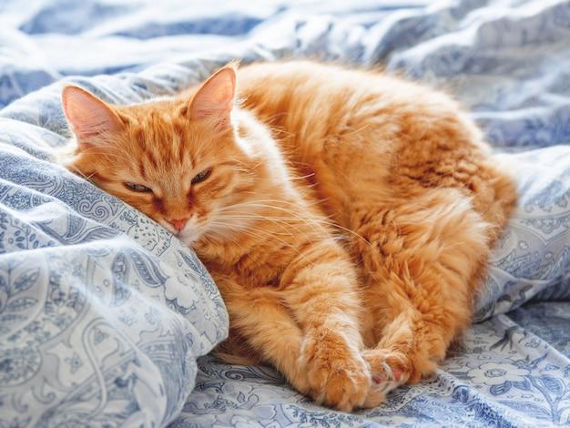 Gatto sveglio dello zenzero che si trova a letto