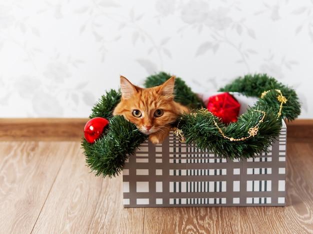 Gatto sveglio dello zenzero che si trova in scatola con le decorazioni di natale e capodanno. l'animale lanuginoso sta facendo giocare lì.