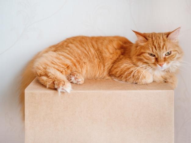 Gatto sveglio dello zenzero che si trova sul contenitore di cartone.