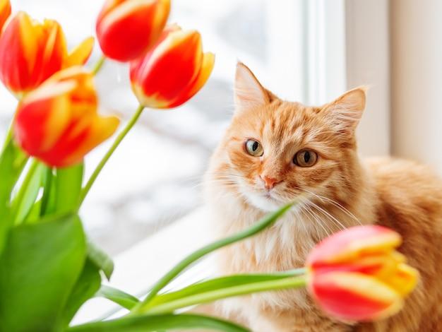 Gatto sveglio dello zenzero con il mazzo dei tulipani rossi. fluffy pet con fiori colorati.