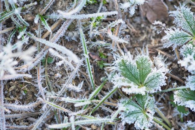 Gelo del gelo con i cristalli di ghiaccio sulla mattina di inverno di verde di erba.