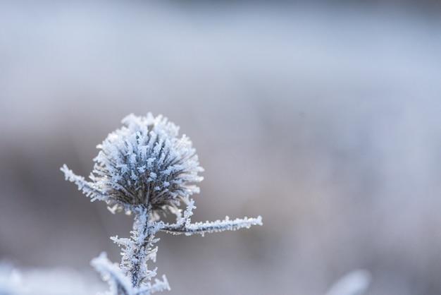 Gelo gelido con cristalli di ghiaccio sui fiori in una mattina d'inverno