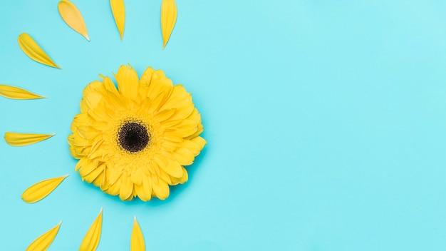 Gerbera gialla di vista superiore con copia-spazio