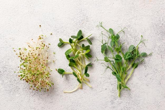 Germogli di micro verdi di varietà fresca