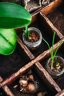 Germogli di piante primaverili