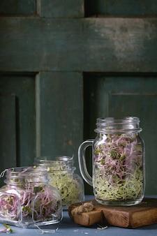 Germogli freschi in barattolo di vetro