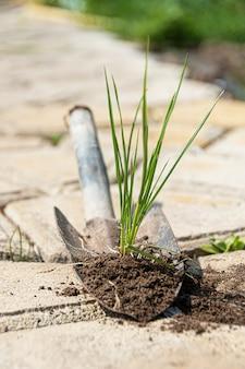 Germoglio di erba con terra su una piccola pala. lavorare in giardino.