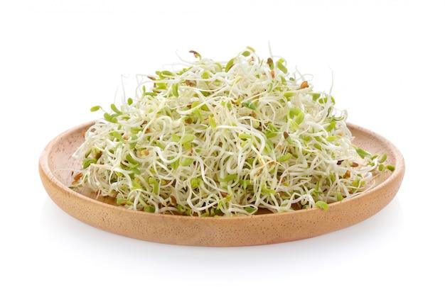 Germoglio di erba medica in piatto di legno su spazio bianco