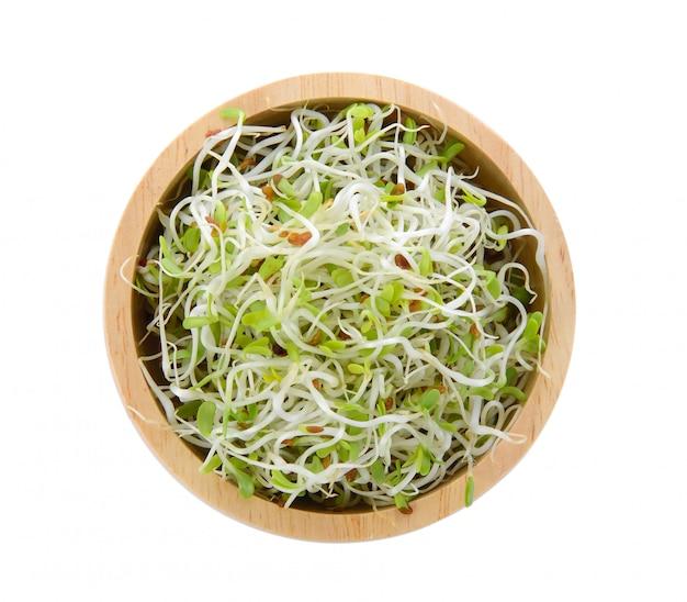 Germoglio di erba medica in una ciotola su spazio bianco