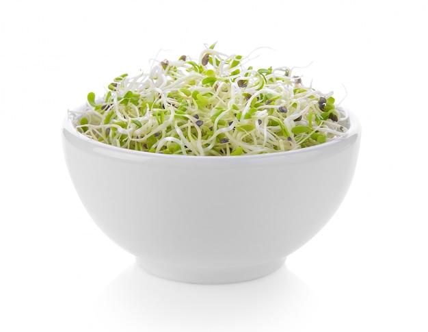 Germoglio di erba medica in una ciotola