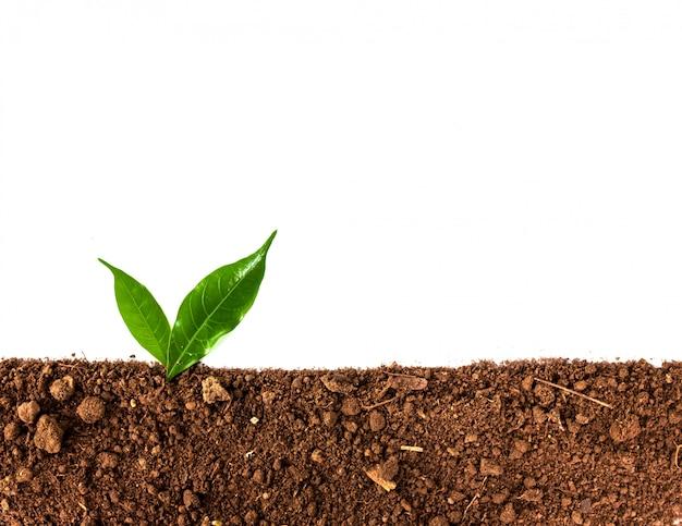 Germoglio verde che cresce fuori dal terreno isolato