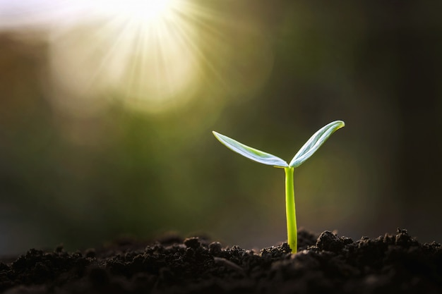 Germoglio verde che cresce in giardino con il sole