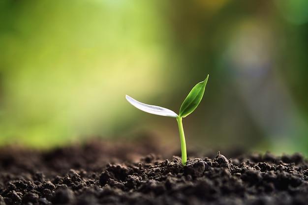 Germoglio verde che cresce in natura nella luce del mattino
