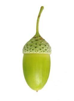 Ghianda verde isolata su fondo bianco