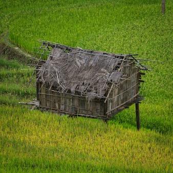 Giacimento a terrazze del riso in mu cang chai, vietnam