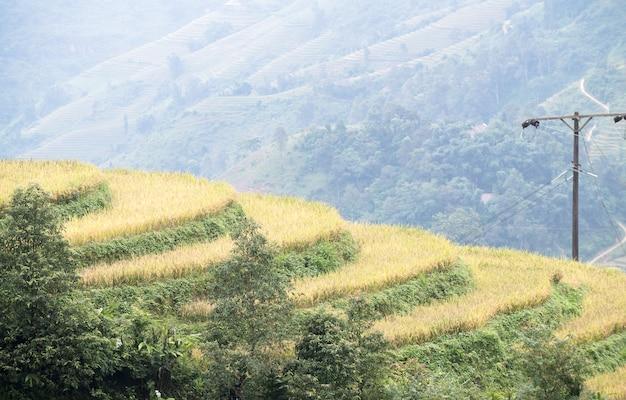 Giacimento a terrazze del riso sulla montagna in sapa, vietnam, concetto di agricoltura