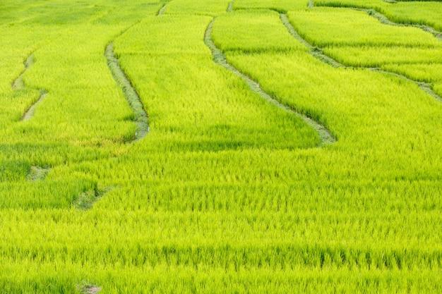 Giacimento a terrazze verde del riso in mae klang luang, mae chaem, chiang mai, tailandia