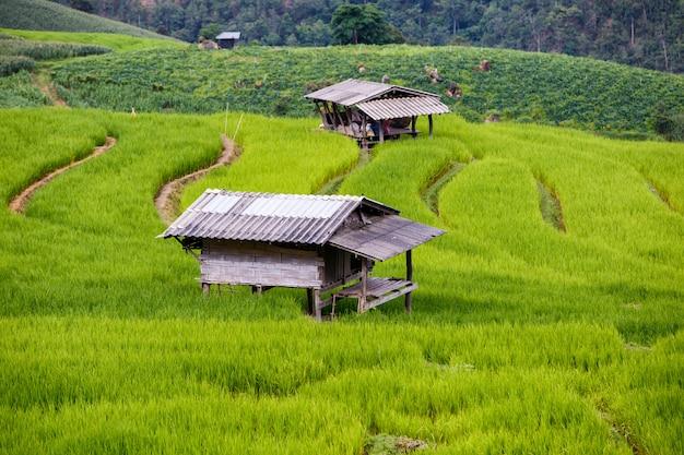 Giacimento a terrazze verde del riso in pa pong pieng, mae chaem, chiang mai, tailandia
