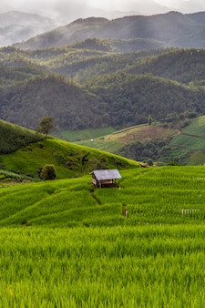 Giacimento a terrazze verde del riso in pa pong pieng, mae chaem, provincia di chiang mai, tailandia