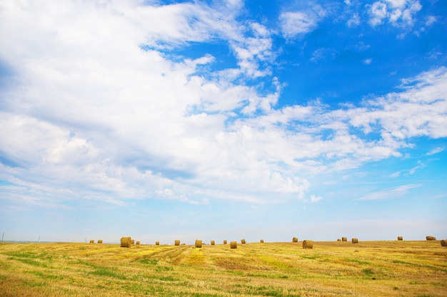 Giacimento di grano di bella estate con le balle rotonde di menzogne