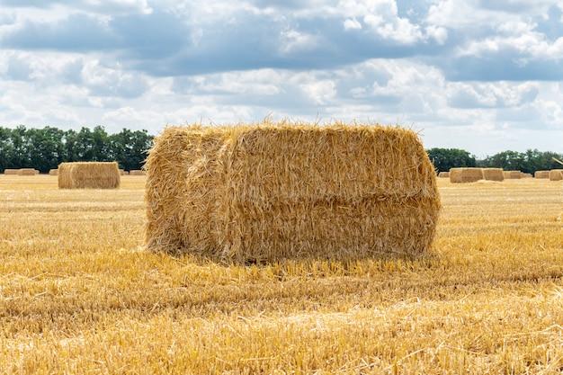 Giacimento di grano raccolto del grano del grano, con i pali delle balle di paglia dei mucchi di fieno sui precedenti nuvolosi del cielo blu. agricoltura agricoltura economia rurale agronomia