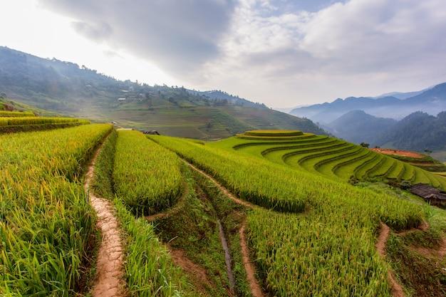 Giacimento verde del riso del terrazzo a mu cang chai, vietnam