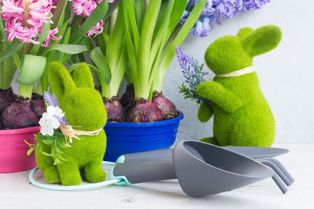 Giardinaggio con fiori freschi blu giacinto vanga e rastrello