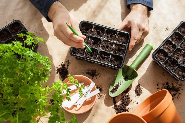 Giardinaggio, piantare a casa. uomo che semina semi in una scatola di germinazione