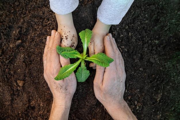 Giardinaggio, piantare piante nel giardino. giardino. messa a fuoco selettiva