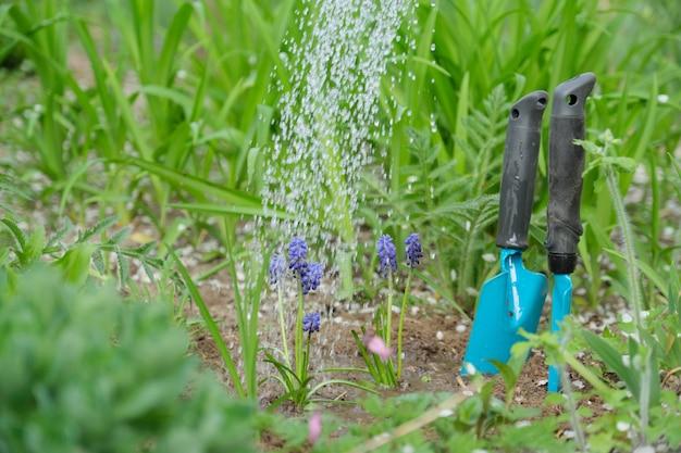 Giardinaggio primaverile, coltivazione e irrigazione di fiori, primavera