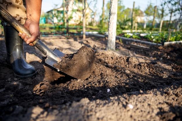 Giardiniere che scava nel giardino. terreno che si prepara per la semina in primavera. giardinaggio.