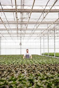 Giardiniere del giovane che sta nella serra