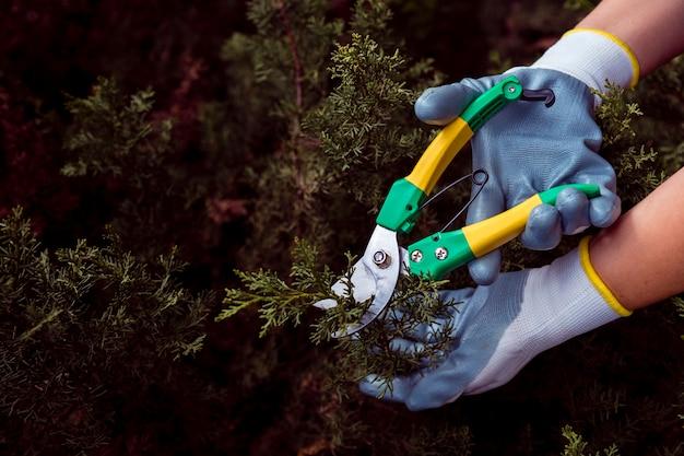 Giardiniere del primo piano che taglia i rami del pino