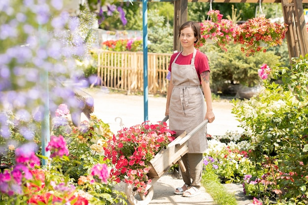 Giardiniere femminile giovane con carrello contadino in piedi da una delle aiuole mentre trasportava nuovi tipi di fiori da piantare
