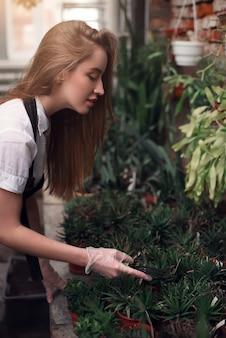 Giardiniere lavora con piante in serra.