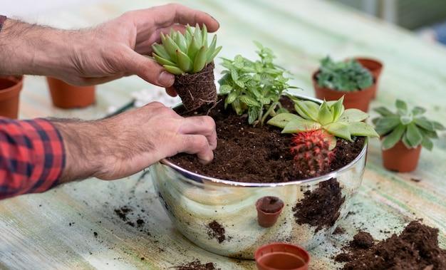 Giardiniere, piantare terrari con piante grasse, cactus