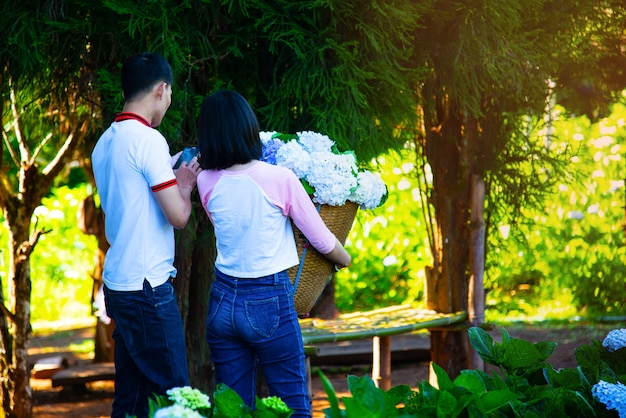Giardino blu dell'ortensia di amore romantico fuori dall'asia chiang mai tailandia.