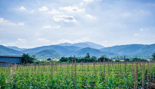 Giardino cantalupo con sfondo di montagna