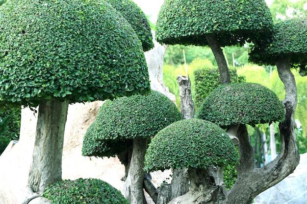 Giardino dell'inghilterra nel tropicale